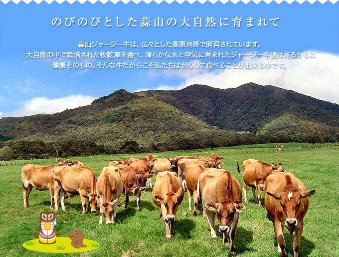 【のびのびとした蒜山の大自然に育まれて】蒜山ジャージー牛は、広々とした高原地帯で飼育されています。大自然の中で栽培された牧乾草を食べ、清らかな水と空気に育まれたジャージー牛達は見るからに健康そのもの。そんな牛だからこそ私たちは安心して食べることが出来るのです。